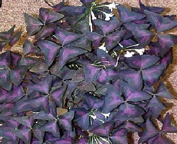 Бисероплетение схемы растения