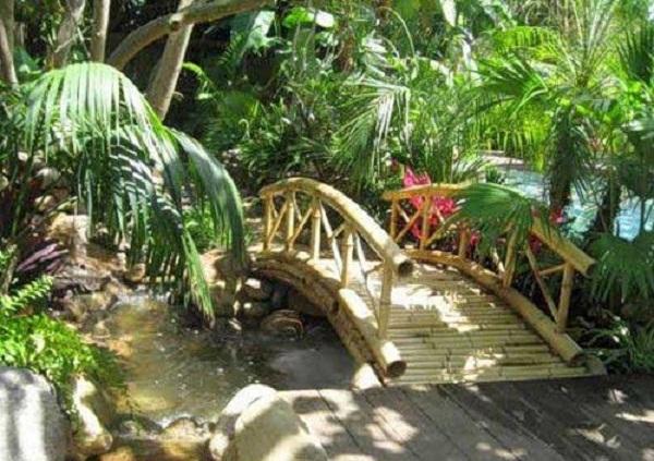 Бамбук в ландшафтном дизайне