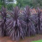 Пальма: как вырастить на загородном участке