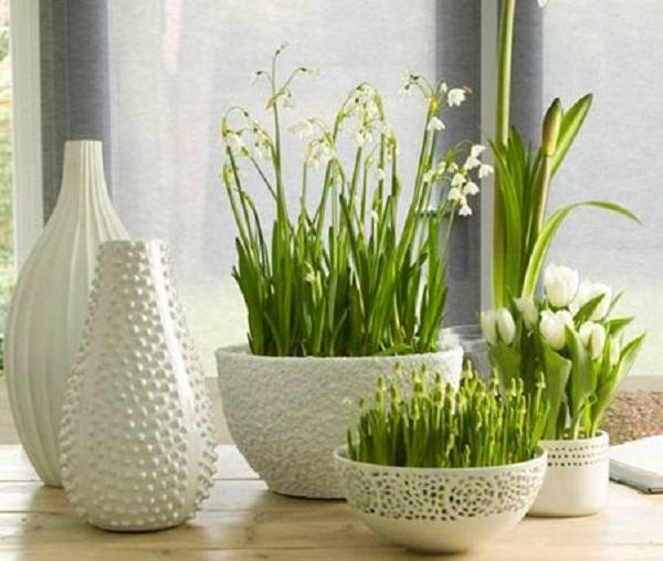 Какие цветы выращивать дома