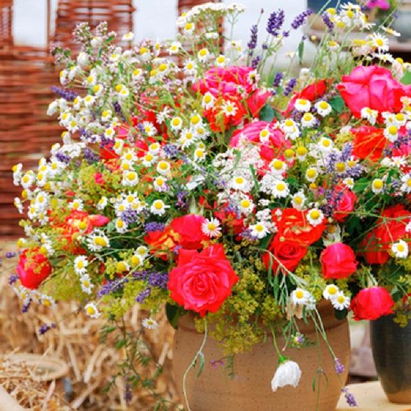 Цветы какие цветы выращивать для
