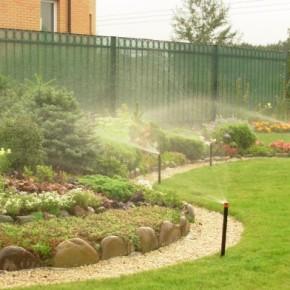 Как и когда поливать растения: утром или вечером