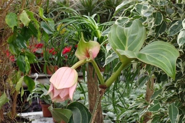 Комнатные растения: какие комнатные ...: supersadovnik.net/komnatnye-rasteniya-kakie-komnatnye-rasteniya...