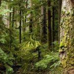 Лес рубят - щепки летят ...