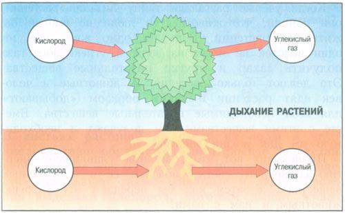 Питание растений:важный