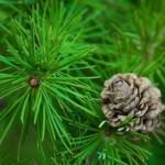 Экологические факторы, которые существенно влияют на ход физиологических процессов в ассимиляционного аппарате древесных растений