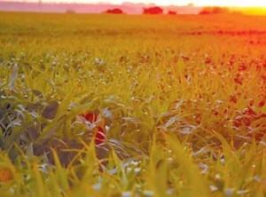 Cодержание азота в урожае