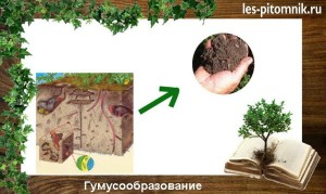 Образования гумуса из органических удобрений