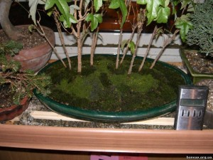 Как вырастить мох в квартире