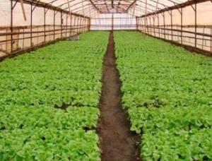 Основные показатели качества растениеводческой продукции