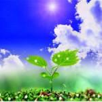 Использования регуляторов роста растений для ускоренного размножения семян пшеницы яровой