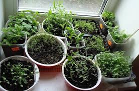 выращивания рассады