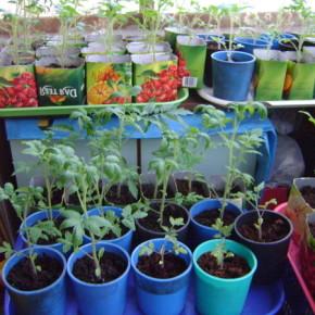 Лучшие дни для посева огородных культур в марте 2013