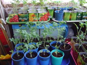 Когда в 2013 году лучше сеять и садить овощи