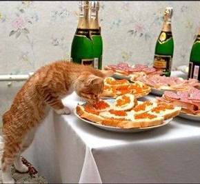 Как правильно ухаживать за кошками