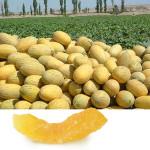 Как правильно выращивать дыни:уборка урожая