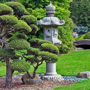 Как правильно сажать хвойные:растения, кустарники и деревья