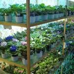 Освещение для комнатных цветов