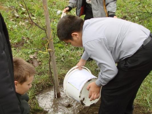 Метки жизненный цикл дерева уход за