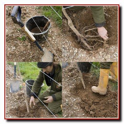 Нужно ли при посадке деревьев добавлять камни