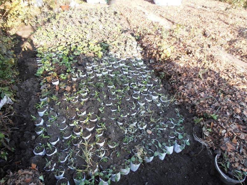 Выращивание рассад в открытом грунте 276