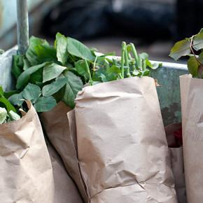 Выращивание саженцев роз:как вырастить розы