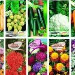 Когда и как сеять семена в 2013:посев семян — фасоли, гороха, кукурузы или подсолнечника