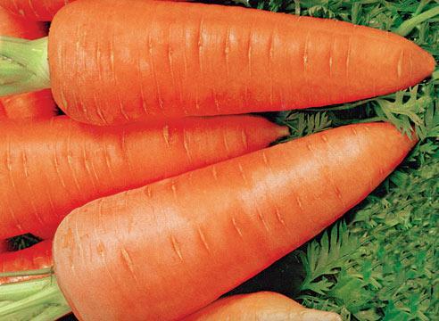 Самые лучшие сорта моркови 2013