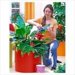 Уход за комнатными цветами:правильный полив