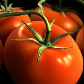 Как бороться с болезнями и вредителями томатов:защита помидор от болезней