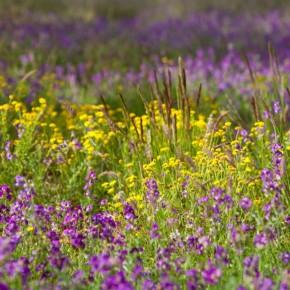 Смешанные посевы сельскохозяйственных культур с медоносными растениями