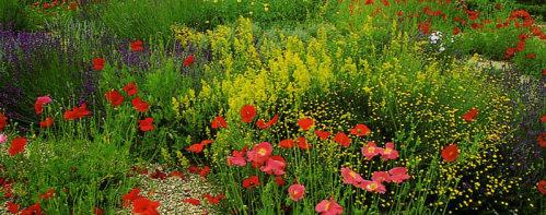 овощные культуры и разные цветы