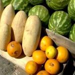 Болезни и вредители бахчевых культур:меры защиты