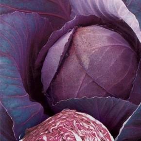 Севооборот при выращивания краснокочанной капусты