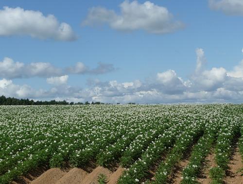 секреты рекордного урожая