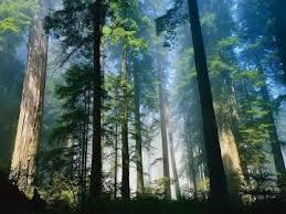 Чем ценные леса