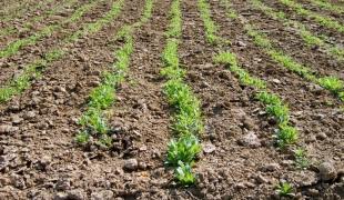 Как сохранить влагу в почве