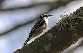 роль птиц в процессе выращивания культур