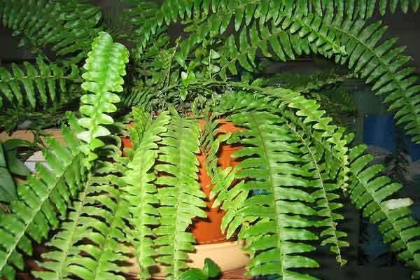 молодым растением