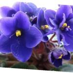 Посадка комнатных цветов семенами:когда высевать