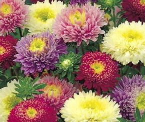 Цветы - любовь всей нашей жизни