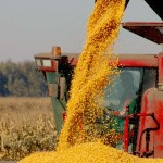 Урожайность кукурузы:селекционное значение