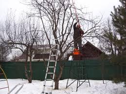 Обрезка деревьев с запущенной кроной