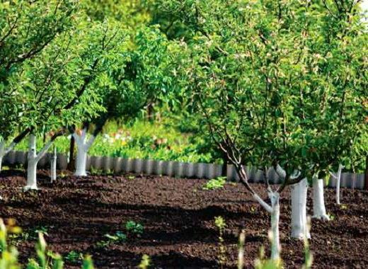 Чем обрабатывать деревья