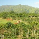 Агротехника выращивания и хранения плодов