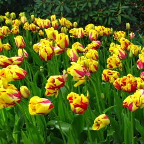 Цветы:как правильно садить и ухаживать