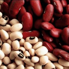 Когда собирают урожай фасоли:хранение семян овощной фасоли