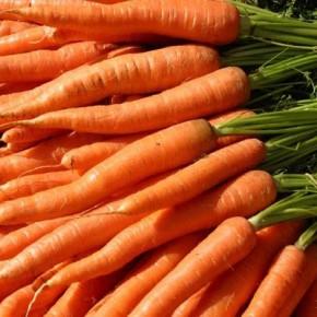 Когда сеять морковь в 2017 году по лунному календарю