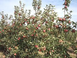 Органические удобрения:нормы и сроки внесения компостов