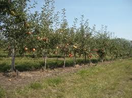 Органические удобрения:растения на зелёные удобрения